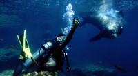 Con el apoyo del Fideicomiso de Turismo de La Paz, Baja California Sur, se llevará a cabo el primer torneo internacional de buceo libre en México en la isla Espíritu […]