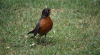 A nivel mundial hay aproximadamente 10 mil especies de aves, de las cuales, mil 150 (11 por ciento) habitan en México, y entre estas, 388 están dentro de la Norma […]