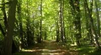 En conferencia informativa a ejidatarios y diversos beneficiarios de programas forestales, la delegación en la Ciudad de México de la Comisión Nacional Forestal (CONAFOR), se presentaron las reglas de operación […]