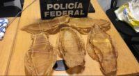 La Procuraduría Federal de Protección al Ambiente (PROFEPA) informó que el ciudadano de origen chino, con nacionalidad mexicana, fue detenido por elementos de la Policía Federal en el Aeropuerto Internacional […]