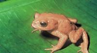 Según la Lista Roja de 2006 de la Unión Mundial para la Conservación de la Naturaleza (IUCN, por sus siglas en inglés), el número de especies consideradas extintas en el […]