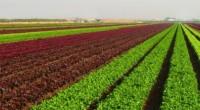 En el marco de la firma del Acuerdo por un México Sostenible de diversas empresas, entre ellas, Syngenta México, su director general, Javier Valdés, comentó que la alimentación y el […]
