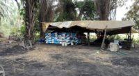En atención a una denuncia ciudadana, inspectores de la Delegación Federal de la PROFEPA acudieron a un Centro de Almacenamiento y Transformación de materias primas forestales (CAT) en el municipio […]