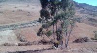 """La Procuraduría Federal de Protección al Ambiente (PROFEPA) clausuró de manera total temporal obras del proyecto """"Fraccionamiento Venecia"""", en el municipio de Zacatecas, Zacatecas, debido a que no cuenta con […]"""