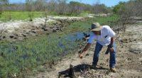 """La Procuraduría Federal de Protección al Ambiente (PROFEPA) clausuró de manera total temporal el predio """"Los Cocos"""", ubicado en el Área Natural Protegida (ANP) Reserva de la Biósfera Ría Celestún, […]"""