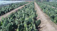 La científica del Instituto Politécnico Nacional (IPN) en la Ciudad de México (CDMX), María Elena Sánchez Pardo, busca aprovechar los residuos agrícolas para elaborar alimentos funcionales, por ello desarrolló galletas […]