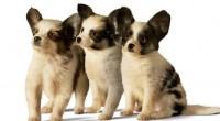 Ante la importancia que tienen las mascotas en la vida de todos y que son considerados parte de la familia, Eukanuba brindó algunas ideas para que esos acompañantes en millones […]