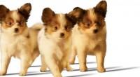 Ante la importancia que tienen las mascotas en las familias y que se les aprecia como parte de las mismas, es esencial el que los cachorros en sus dietas tengan […]