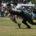Con dos pases de touchdown del QB Axel Medina Padilla (1), de 24 y 45 yardas, ambos en el segundo cuarto, y un gol de campo que él mismo conectó, […]