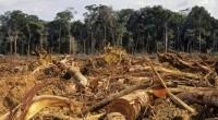 De acuerdo al Consejo Civil Mexicano de Silvicultura Sustentable (CCMSS), el presupuesto forestal presentado para el año 2015 es un ejercicio de opacidad ya que la crisis que sufre el […]
