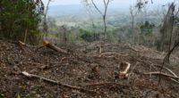 Este fin de semana la Asociación Civil CALIXAXAN 1 publicó en facebook (https://www.facebook.com/Calixaxan/), que en un recorrido realizado en la Sierra del Totonacapan en el estado de Veracruz se detectó […]
