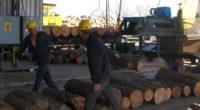 En busca de mantener un desarrollo forestal de primera categoría, el grupo ejidal Sezaric, ubicado en el municipio de Santiago Papasquiaro, en el estado de Durango –noroeste de México- estableció […]