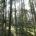 En diversas zonas de aprovechamiento forestal de los ejidos El Salto, El Brillante y la Victoria, en el municipio de Pueblo Nuevo, en el estado de Durango –noroeste de México-, […]