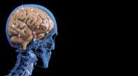 En México, no hay cifras exactas sobre el número de pacientes con Parkinson. Sin embargo, el Instituto Nacional de Neurología y Neurocirugía estima que hay 50 casos nuevos cada año […]