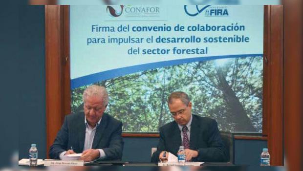 La Comisión Nacional Forestal (Conafor) firmó un convenio de colaboración con Fideicomisos Instituidos con Relación a la Agricultura (FIRA), mediante el cual se comprometen a implementar modelos y esquemas de […]