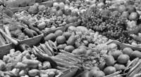 La atroz sequía que aqueja al campo mexicano provocó, como primera reacción, el apresuramiento de cambios de cultivos en regiones que venían siendo alacena nacional por otros que requieren menores […]