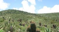 En las zonas semidesérticas de San Luis Potosí (SLP), que es la entrada natural al desierto de Chihuahua, se apuesta al desarrollo con base al turismo rural, ello con base […]