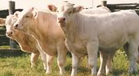Autoridades agropecuarias (Sagarpa) destinan 2 mil 460 millones de pesos para enfrentar el problema de la sequía en la ganadería nacional, uno de los sectores más castigados por este fenómeno […]