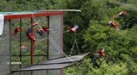 Después de más de medio siglo, la Guacamaya Roja regresó a volar en la selva tropical de Los Tuxtlas, Veracruz, ello tras la liberación de 27 ejemplares; esfuerzo que fue […]
