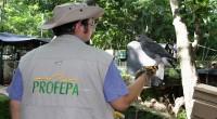 """En el Puerto de Veracruz fueron decomisados 92 ejemplares de vida silvestre al zoológico Botánico """"Miguel Ángel de Quevedo"""", por inspectores de la Procuraduría Federal de Protección al Ambiente […]"""