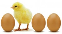 En el marco del Día Mundial del Huevo, se informó que México es el primer consumidor del mundo de huevo en plato; producto que se catalogó como una gran alternativa […]