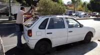 """Como parte del programa """"Árbol por árbol, tu ciudad reverdece"""", el jefe delegacional en Coyoacán, Valentín Maldonado anunció la instalación de tres centros de acopio en la demarcación para recolectar […]"""