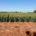 Para contribuir al fortalecimiento de las cadenas productivas de granos en el noroeste de México, la Secretaría de Agricultura, Ganadería, Desarrollo Rural, Pesca y Alimentación (SAGARPA) a través del Instituto […]
