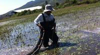 El Instituto de Investigaciones sobre los Recursos Naturales (INIRENA) de la Universidad Michoacana de San Nicolás de Hidalgo, en busca de contar con análisis adecuados de especies acuáticas y ecosistemas […]