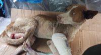 Humane Society International/México está listo y evaluando las necesidades de los animales para responder a la devastación causada ayer por el terremoto de magnitud 7.1, tras el cual han fallecido […]