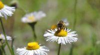 La Alianza WWF – Fundación TELMEX Telcel, comparte algunas recomendaciones para sumarnos a la conservación de especies polinizadoras desde nuestro hogar. Suele pensarse que para cuidar del medio ambiente es […]
