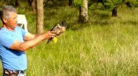 La Procuraduría Federal de Protección al Ambiente (PROFEPA) aseguró de manera precautoria 42 ejemplares de vida silvestre, en diferentes municipios del Estado de México, debido a que sus poseedores no […]