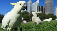 Loros, guacamayas, pericos y cacatúas forman parte de una familia de aves que agrupa a más de 350 especies caracterizadas por su alto nivel de inteligencia y su capacidad para […]