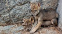 En aras de cumplir uno de sus principales objetivos, Parque Ecológico Zacango, ubicado en el Estado de México de apoyar la preservación de especies con base a programas de conservación […]