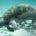 La Secretaría de Medio Ambiente y Recursos Naturales (SEMARNAT) de México y el Ministerio de Ecología, Desarrollo Sustentable y Energía de la República Francesa acordaron impulsar un plan con medidas […]
