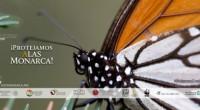 La mariposa Monarca representa la salud de los ecosistemas de América del Norte, su recuperación es responsabilidad de todos. La Monarca llega a nuestro país procedente de Canadá y Estados […]
