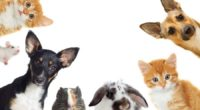 En la actualidad convivir con un animal de compañía es cada vez más frecuente, lo que ha permitido que los animales sean parte importante de la familia. Sismos, huracanes, erupción […]