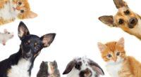 Es bien sabido que nuestros amigos de cuatro patas poseen oídos más agudos y sensibles que el de los humanos, esto les permite percibir sonidos a grandes distancias o ser […]