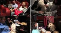 La cadena de tiendas de mascotas +KOTA, celebró la premiere pet friendly de la película Mi papá es un Gato y alrededor de 100 personas fueron testigos de este gran […]