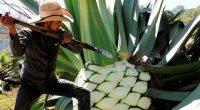 El Centro Interdisciplinario de Investigación para el Desarrollo Integral Regional (CIIDIR), Unidad Michoacán del Instituto Politécnico Nacional (IPN), ubicada en la zona del bajio mexicano, anunció que realiza diversos trabajos […]
