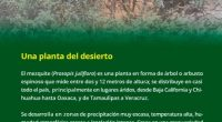 Daniel González Mendoza, investigador del Instituto de Ciencias Agrícolas (ICA) de la Universidad Autónoma de Baja California (UABC) al norte del país, analiza los mecanismos bioquímicos y fisiológicos de dos […]