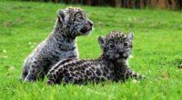En Reino Animal el Parque Temático del municipio de Teotihuacán, en el Estado de México (edomex), dio a conocer que han nacido dos crías de Jaguar dentro de sus instalaciones, […]