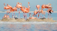 La Dirección de la Reserva de la Biósfera Ría Lagartos, la Comisión Nacional de Áreas Naturales Protegidas (CONANP); la Fundación Pedro y Elena Hernández, A. C. y diversos organismos, realizaron […]
