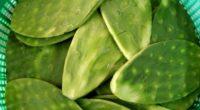 México ha sido privilegiado por la naturaleza al ser epicentro de uno de los frutos más bondadosos, el nopal. Esta planta sirve como alimento nutritivo, rico en fibra y que […]