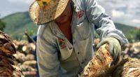 Los mezcaleros de Oaxaca han posicionado su calidad, respetando su materia prima, que es principalmente el maguey, el cual crece en lugares determinados, lo que los hace alcanzar características únicas. […]