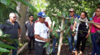 En el mes de abril inició uno de los programas más ambiciosos de recuperación de la vainilla mexicana en el estado de Chiapas, en la frontera sur del país. Cuatro […]