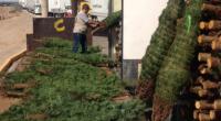 Al final de la temporada decembrina, los árboles que fueron cortados para adornar los hogares mexicanos pueden ser aprovechados como composta para producir suelo fértil y generar nutrientes para las […]