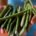 """El Instituto Tecnológico y de Estudios Superiores de Monterrey y Cementos Mexicanos (CEMEX) otorgaron el premio al proyecto """"Conservación y producción de vainilla en la sierra de Otontepec, Veracruz"""" en […]"""