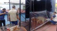 La Procuraduría Federal de Protección al Ambiente (PROFEPA) aseguró un ejemplar de león africano en la azotea de un edificio en la colonia Merced Balbuena, Ciudad de México, debido a […]