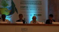 El titular de la CONABIO, José Sarukhán recibió el premio Campeones de la Tierra de las Naciones Unidas por una vida de liderazgo e innovación en la conservación de la […]