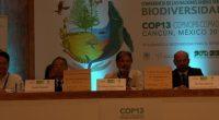 Siendo el mayor reto de las Islas mexicanas; la fauna exótica, la organización ganadora del premio Midori a la Biodiversidad, Aguirre Muñoz, director ejecutivo de Grupo de Ecología y Conservación […]